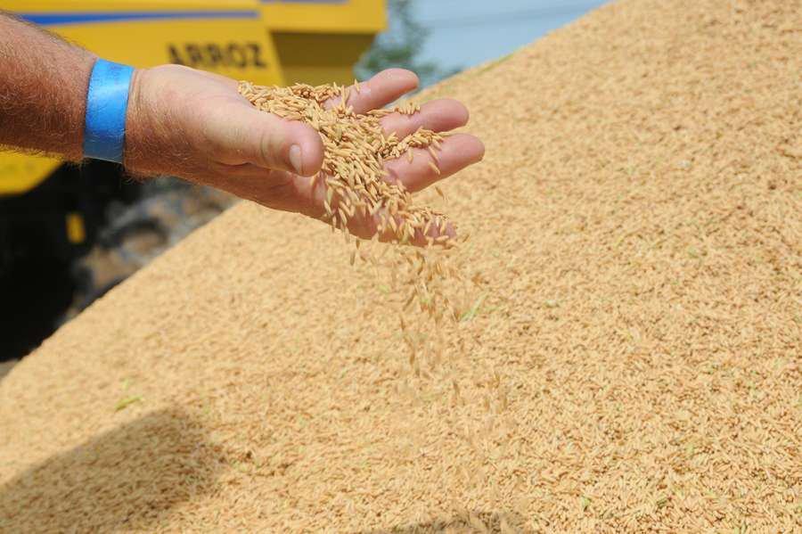 Colheita de arroz será menor em 2019
