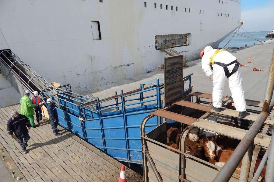 Setor de carne bovina começa a se recuperar após a Operação Carne Fraca