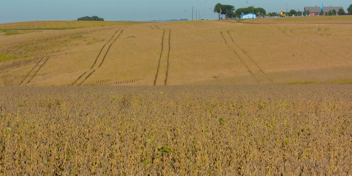 Março foi positivo para o cultivo da soja, com ocorrência de chuvas regulares nas regiões produtoras