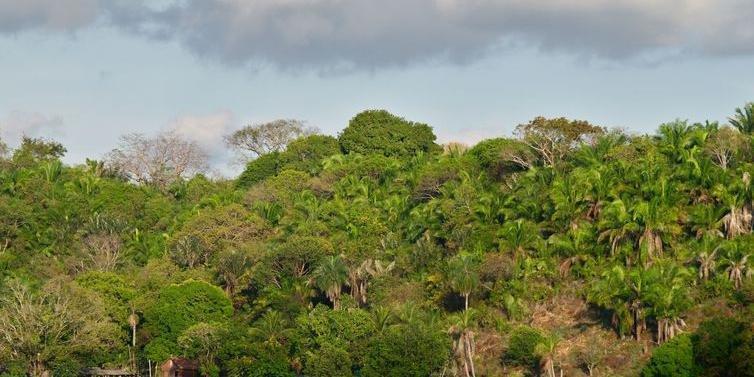De acordo com dados do IBGE, o Brasil tem cerca de 10 milhões de hectares de árvores plantadas
