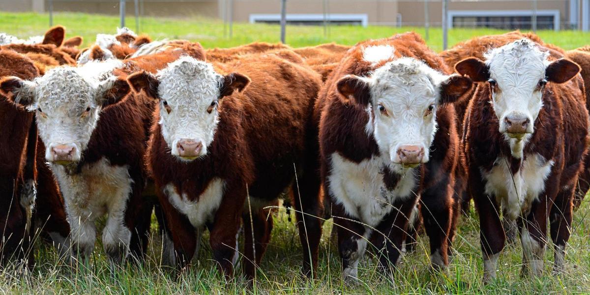 Exportação de carne bovina para o país asiático havia sido suspensa no começo de junho