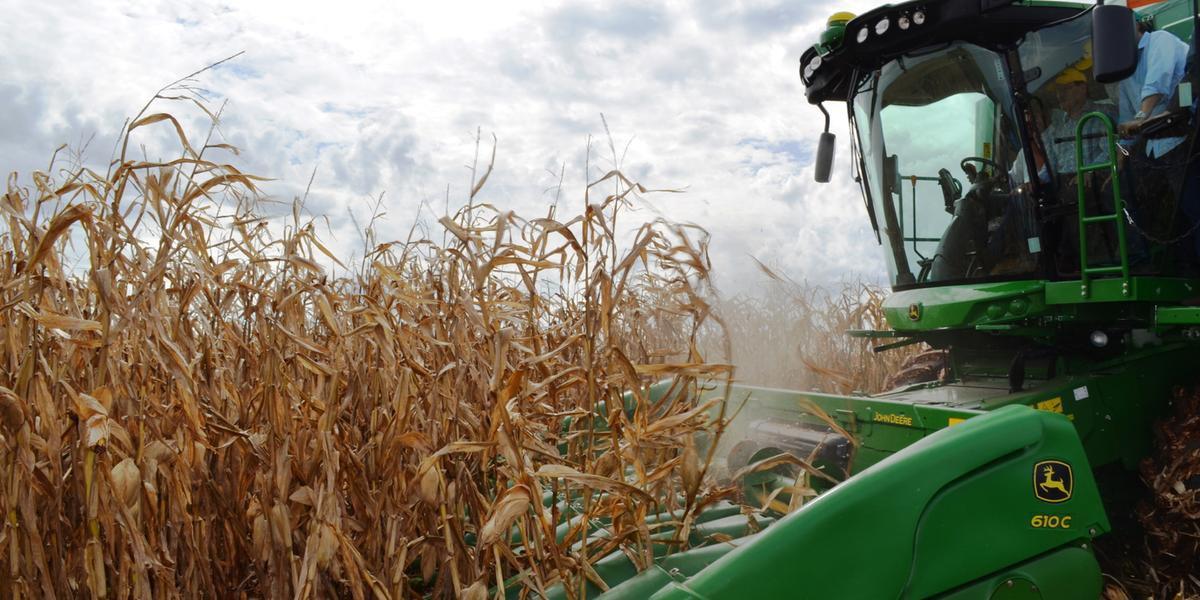 Safra total de milho em 2018/19 deve ter aumento de 22% em relação ao período anterior