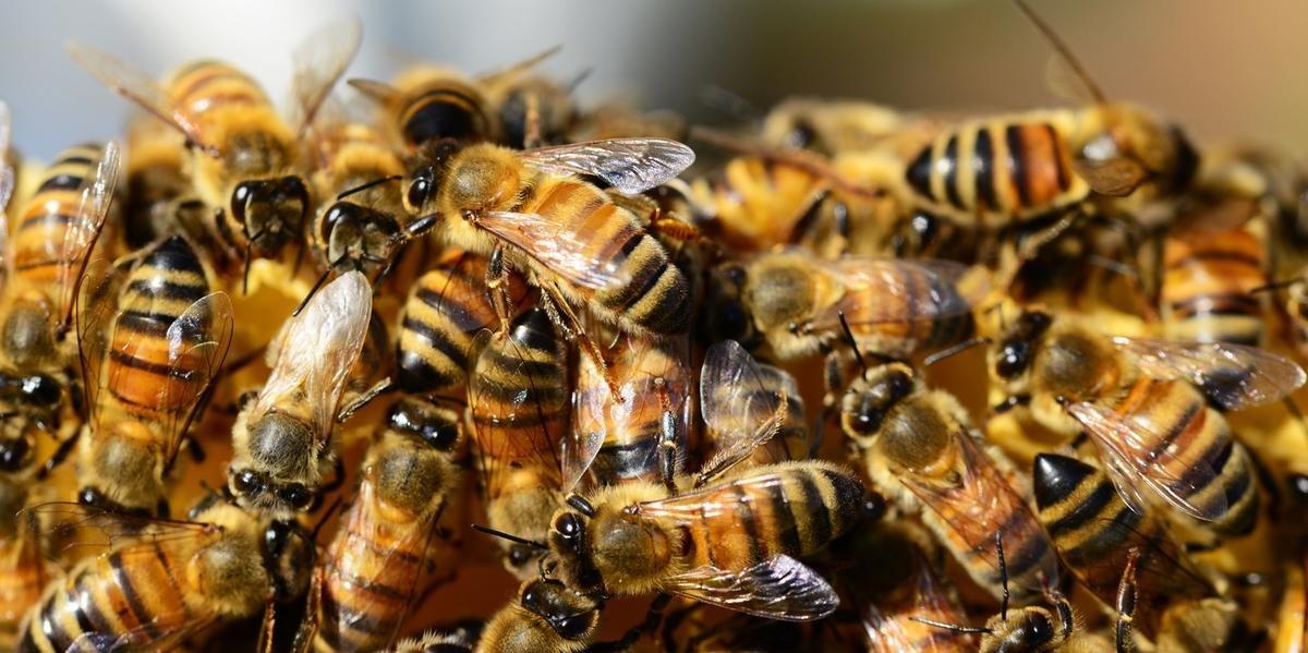 Uso do inseticida à base de Fipronil é autorizado na cultura da soja