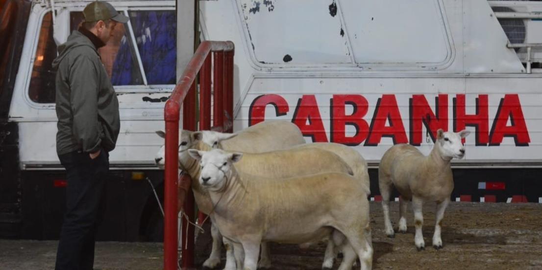 Animais da Cabanha Oliveira foram os primeiros a chegar na Expointer