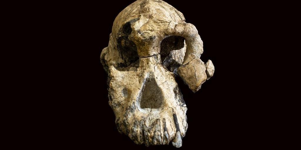 Crânio deve ser de um adulto, do gênero masculino a priori