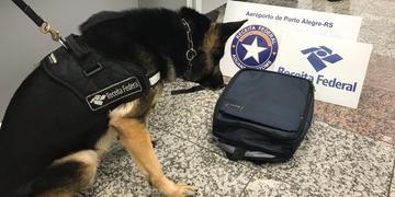 Cão farejador confirmou presença de substância