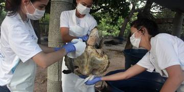 Petróleo afetou animais em praias brasileiras