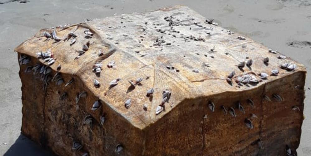 Caixas começaram a aparecer no litoral do Nordeste há um ano e resultado do estudo foi divulgado recentemente