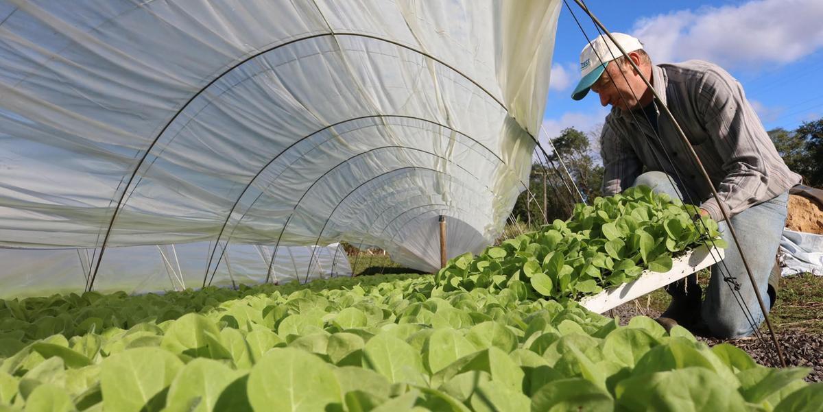 Resultados do fumo ajudaram no saldo positivo das exportações gaúchas no agronegócio no trimestre