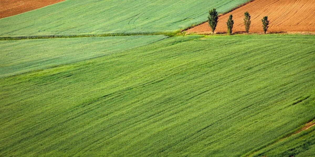 Autor do PL calcula que a compra de terras por estrangeiros pode atrair investimentos de R$ 50 bilhões por ano