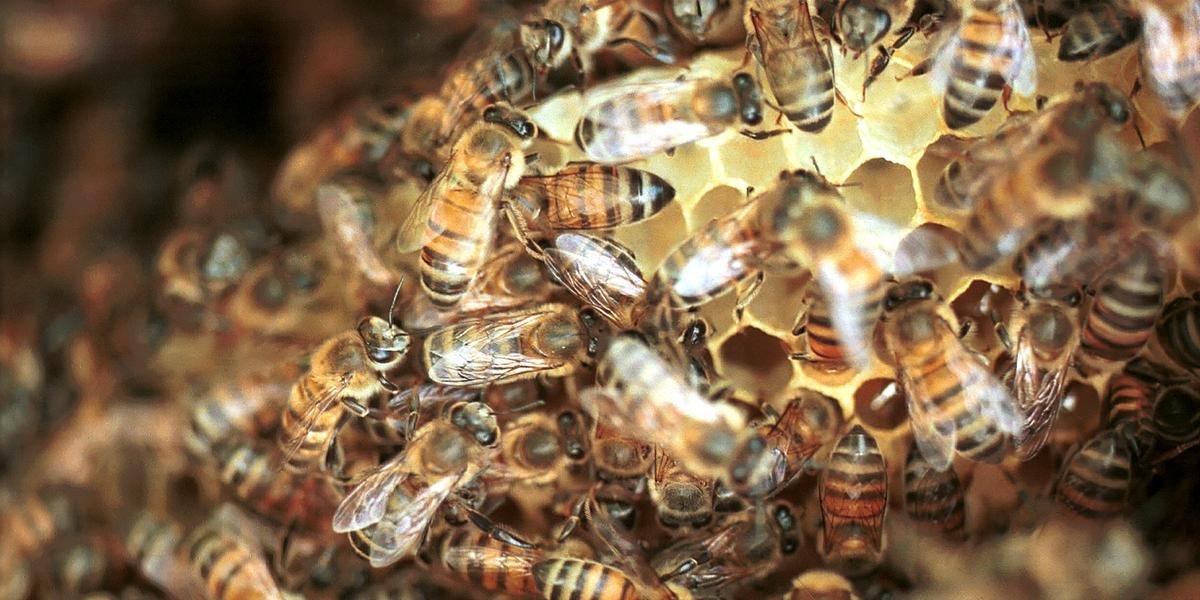 Produto vendido sob as marcas Calypso e Biscaya, da Bayer, já foi ligado à mortandade de abelhas