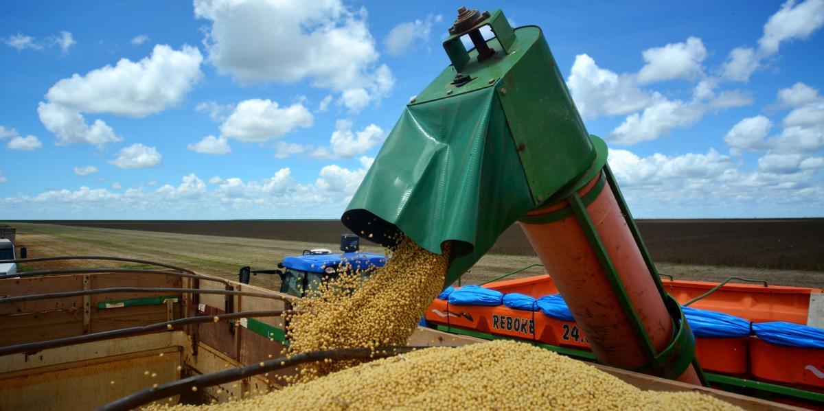 A área de soja cresceu 2,4%
