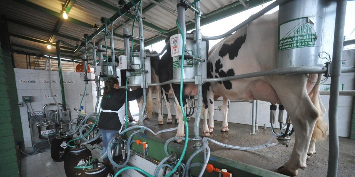Produção de leite costuma estar ligada a propriedades familiares, onde há pessoas idosas, que pertencem a grupo de risco