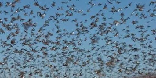 Técnicos argentinos dizem que a população dos insetos está diminuindo