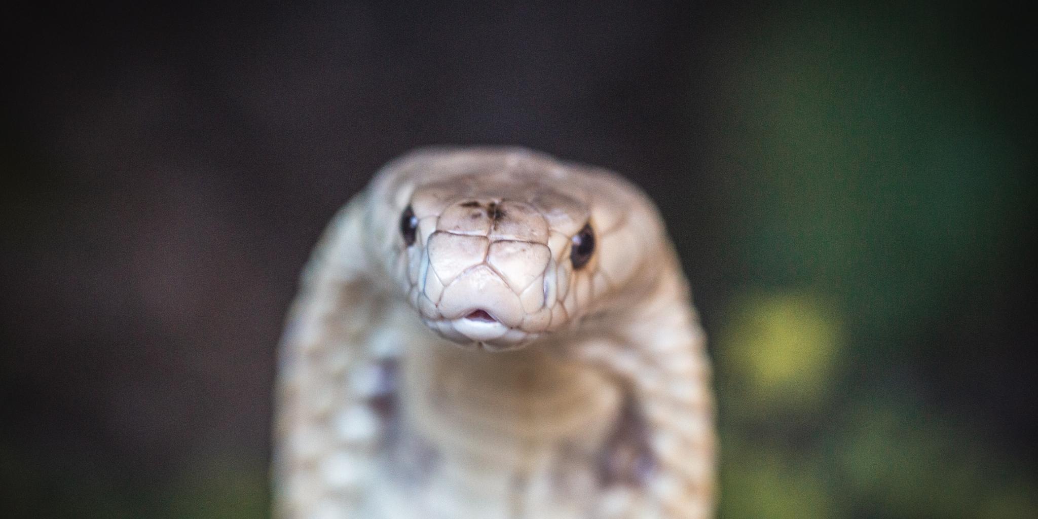 Cobra foi encontrada próximo a um shopping em Brasília