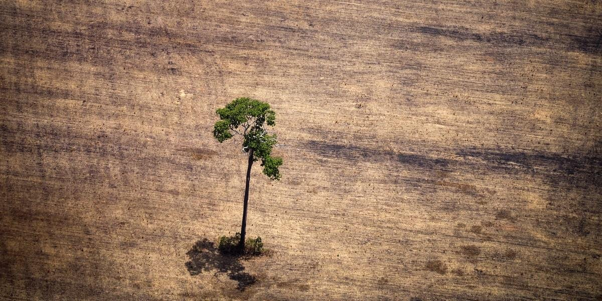 A ideia unânime é usar recursos da floresta sem derrubá-la