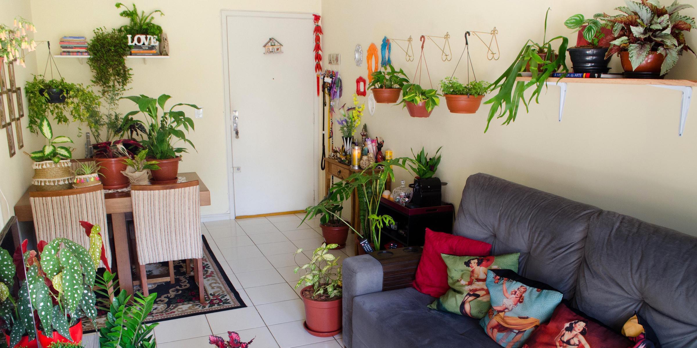 Natália Rodrigues e o marido Carlos Tondim, do Casal das Plantas, têm 46 plantas em casa