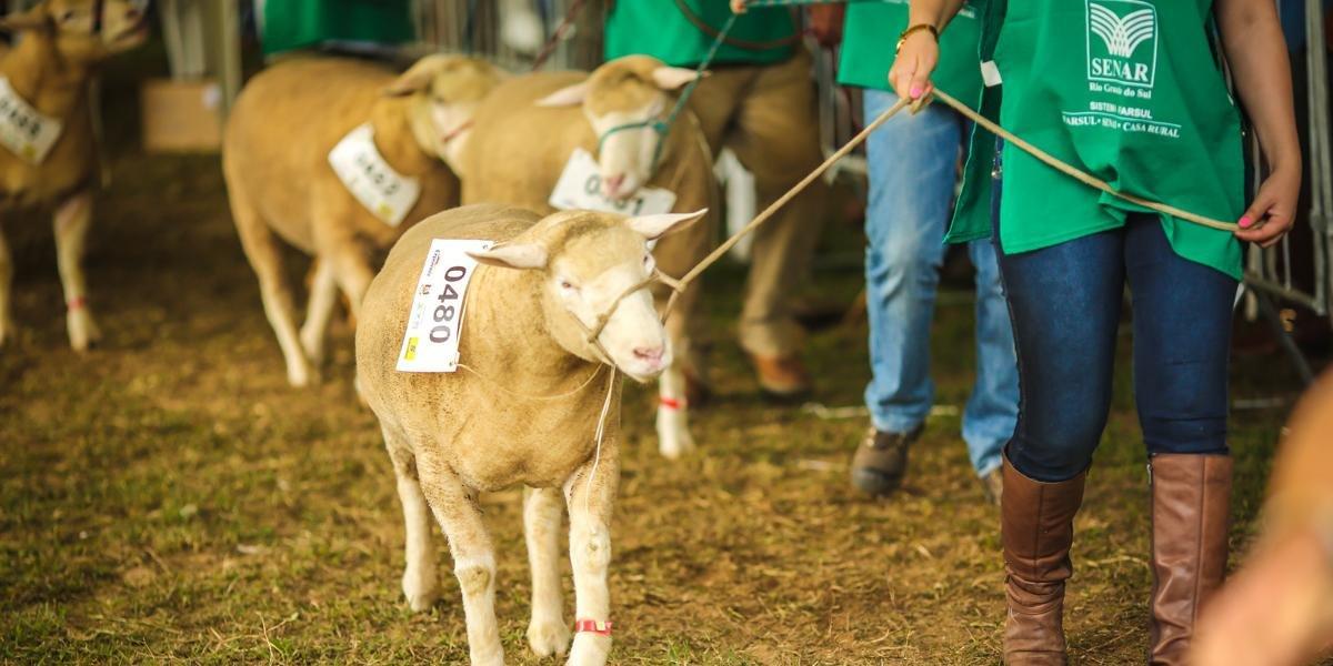 A exposição de animais tem por objetivo expor e comercializar reprodutores das diferentes espécies de animais domésticos