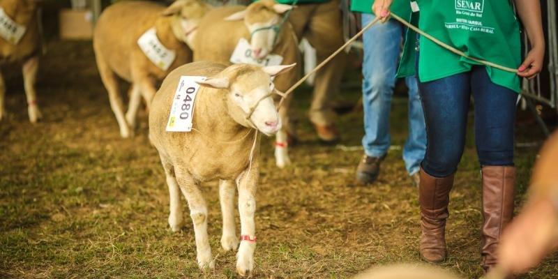 Inscrição de animais continua sendo por meio das associações de criadores