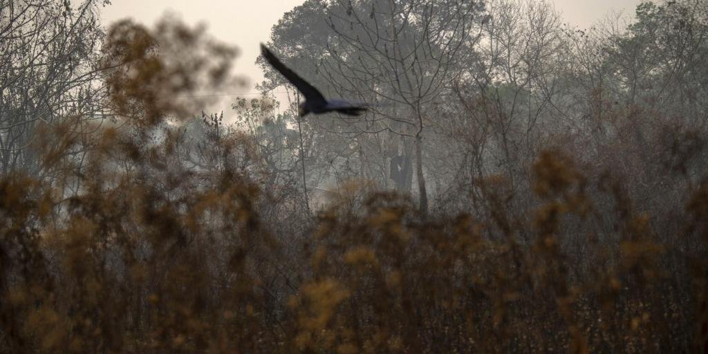 As correntes aéreas arrastam a fumaça desde os focos da queimada até outras regiões