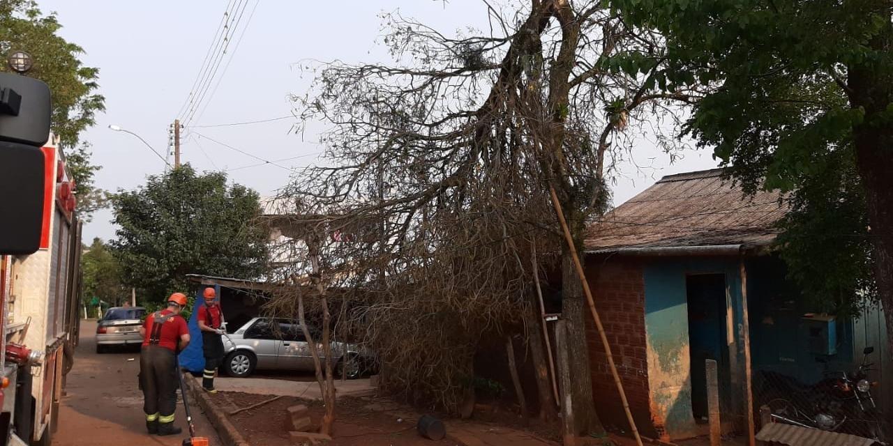 O vento derrubou árvores em vários locais da cidade
