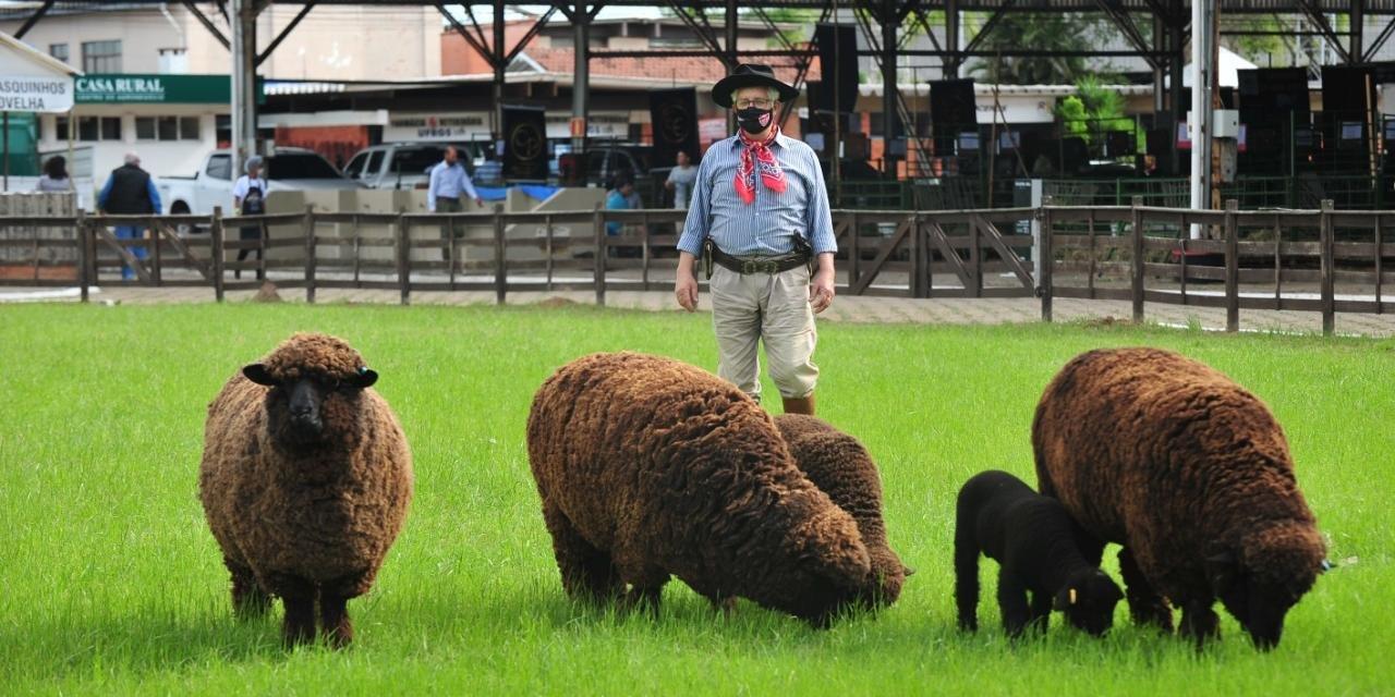 Criador de ovinos, Oscar Collares, lamenta falta de público para divulgar animais