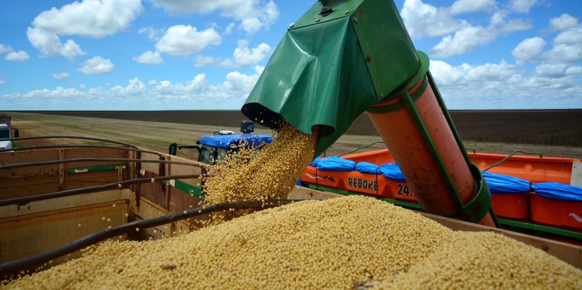 Estimativa mantém o Brasil como maior produtor de soja do mundo