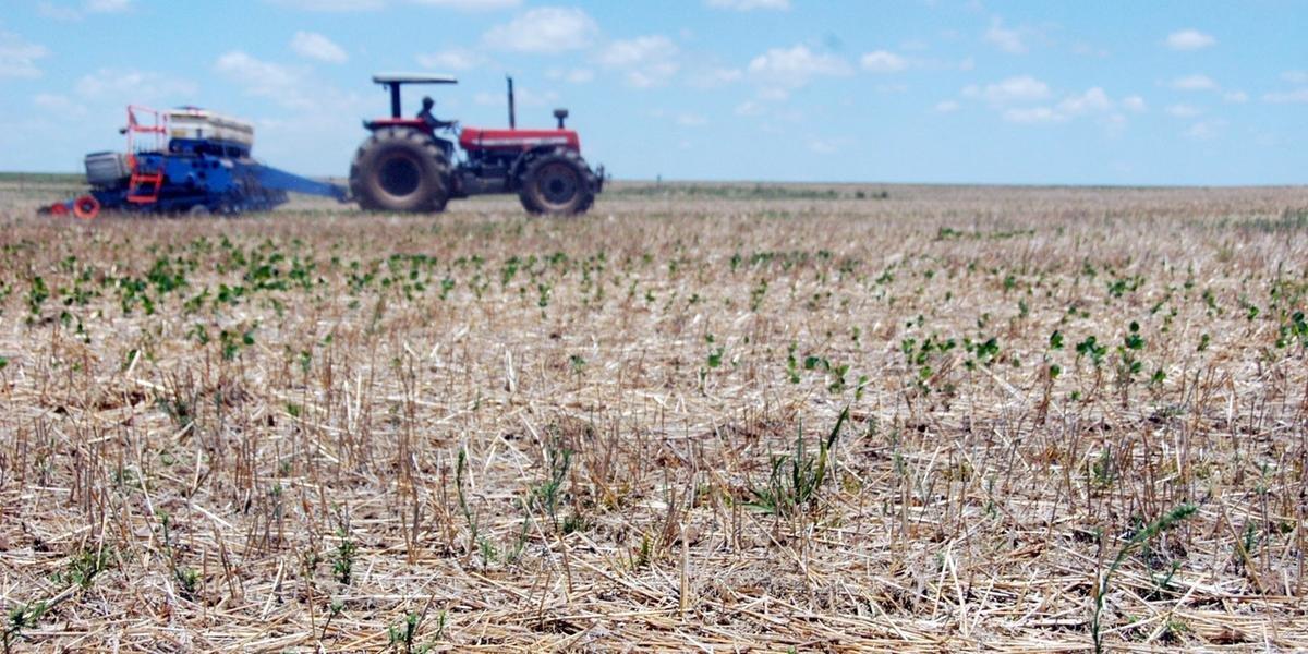 Expectativa dos agricultores é que safra recupere perdas do ciclo passado