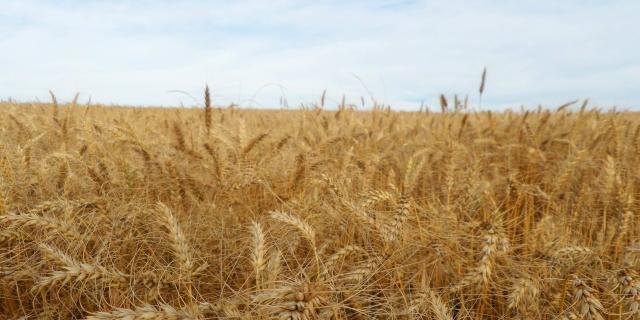 Queda na produtividade deve ser compensada por aumento de 26,4% na área plantada