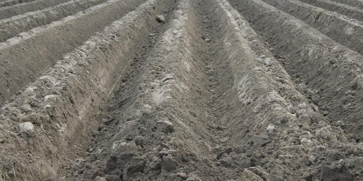 Só 30% da área de 6 milhões de hectares destinada à soja no Estado foram semeados
