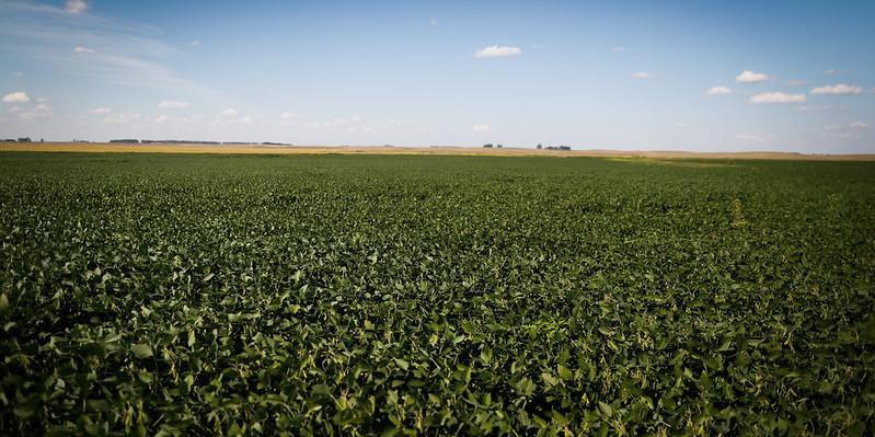 Produtores de soja foram os que mais investiram em apólices no Estado