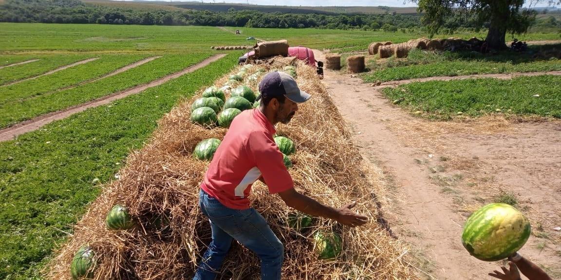 Colheita já está 95% concluída no município de Arroio dos Ratos