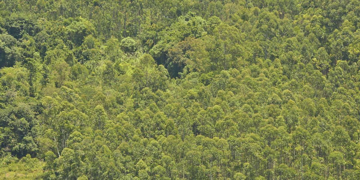 Expectativa é de que a liberação pode trazer benefícios ao setor florestal