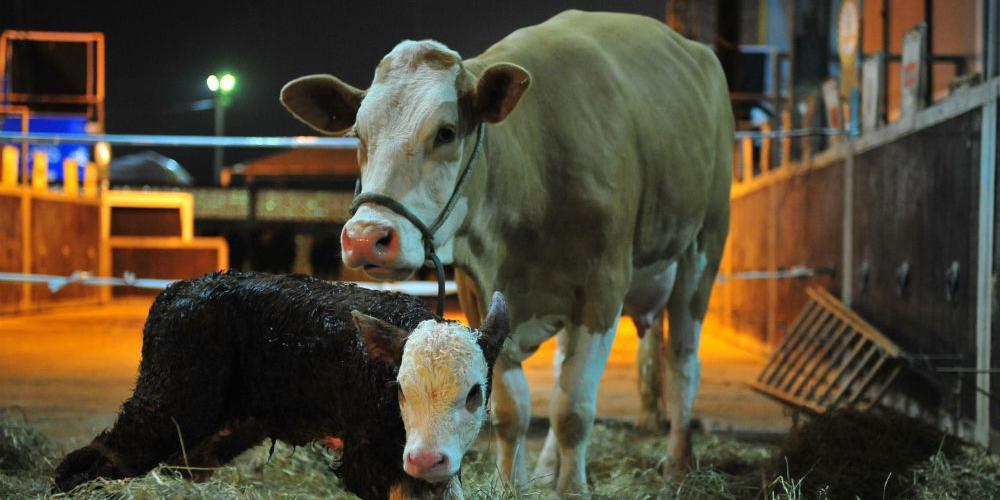 Dudu apresentou definições e critérios que precisam ser observados para garantir bem-estar animal